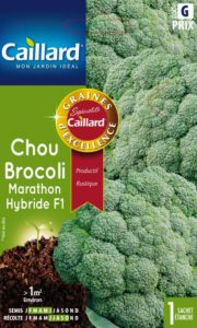 chou-brocoli-marathon-hybride-f1